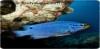 Fish aquarium supplies Avatar